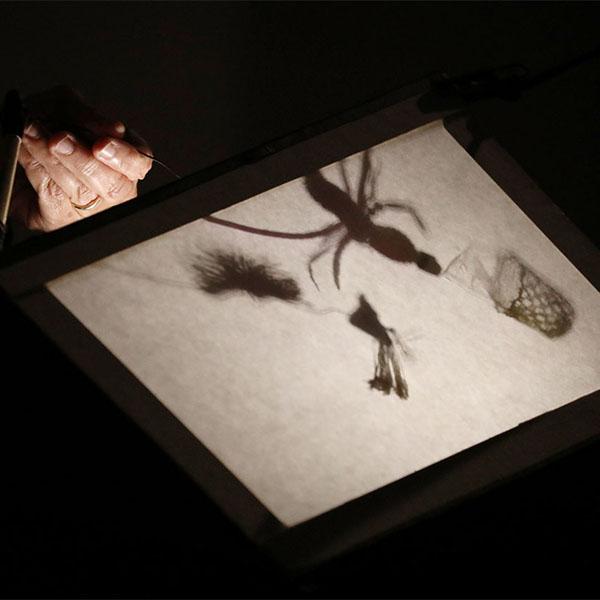 Toni Warburton, Artist Notes