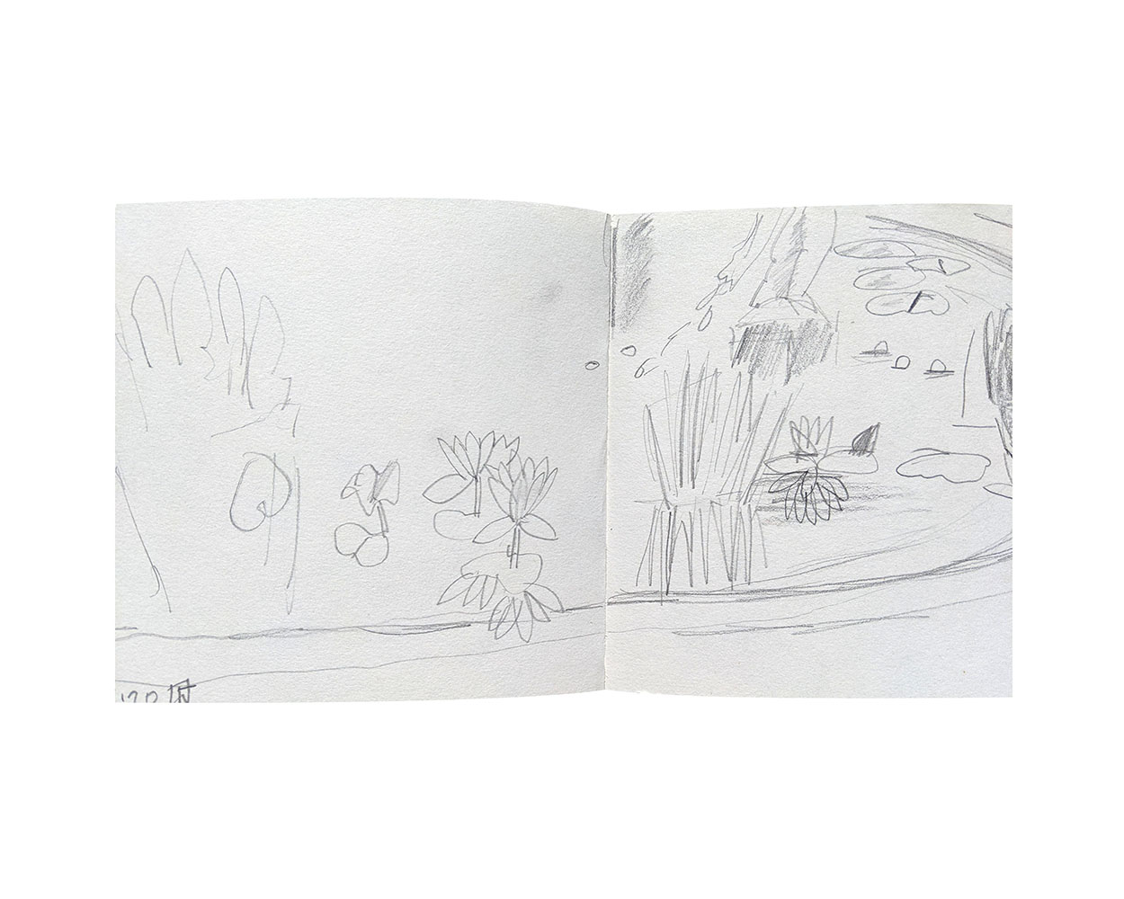 Toni Warburton Artist, Sketch book, Gardens